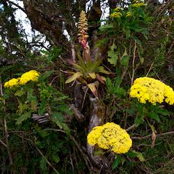 Flowers&bromeliadHEader